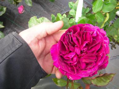 'Darcey Bussell'